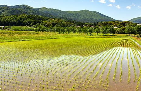 加悦谷平野を囲む山々がミネラル豊富な水を蓄える