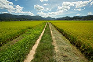 与謝野町の農業取り組みの経過