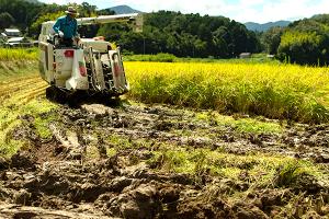 微生物が土の団粒化を促進