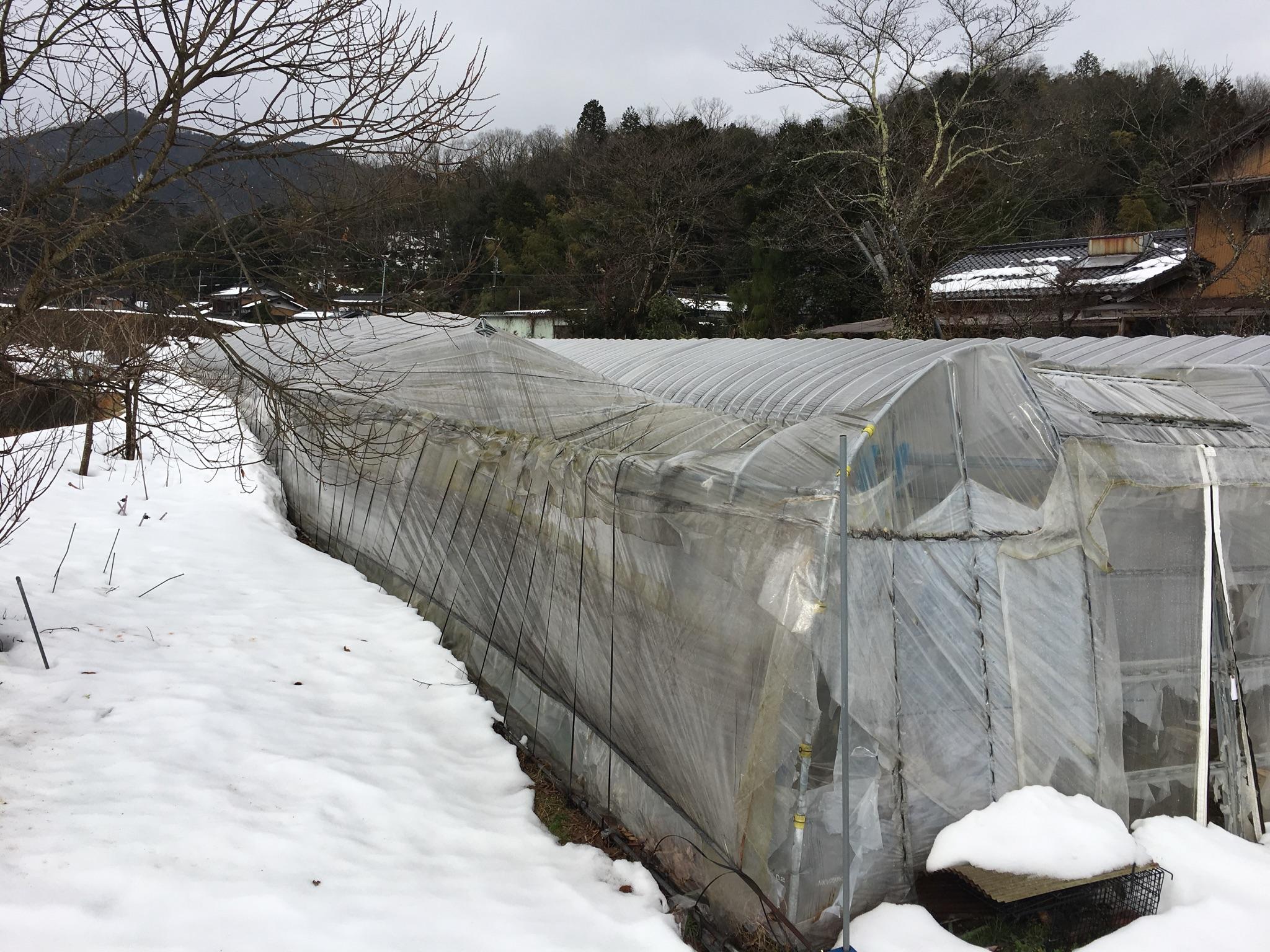 鳥垣昭-1 雪